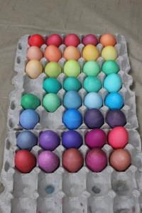 Easter Egg Rainbow